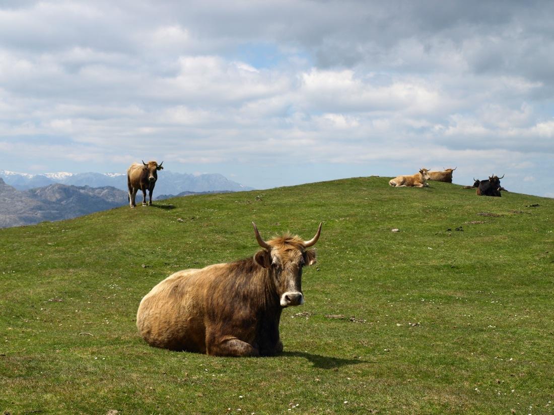 Pedales de Cantabria I CONUNPARDERUEDAS.com